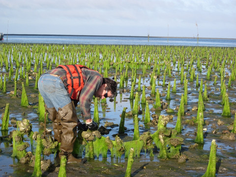 http://fishpeopleseafood.com/blogs/news/39543748-how-one-man-s-love-for-the-ocean-led-to-a-sustainable-oyster-farm